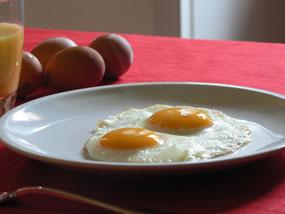 Proteine dell'uovo per lo sportivo